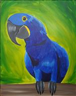 Jellybean the Blue Macaw