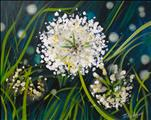 **ART IN THE AFTERNOON** White Wildgrass Flowers