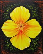 The Golden Poppy